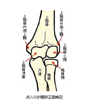 腕骨 骨折 上 上 顆 😊上 腕骨